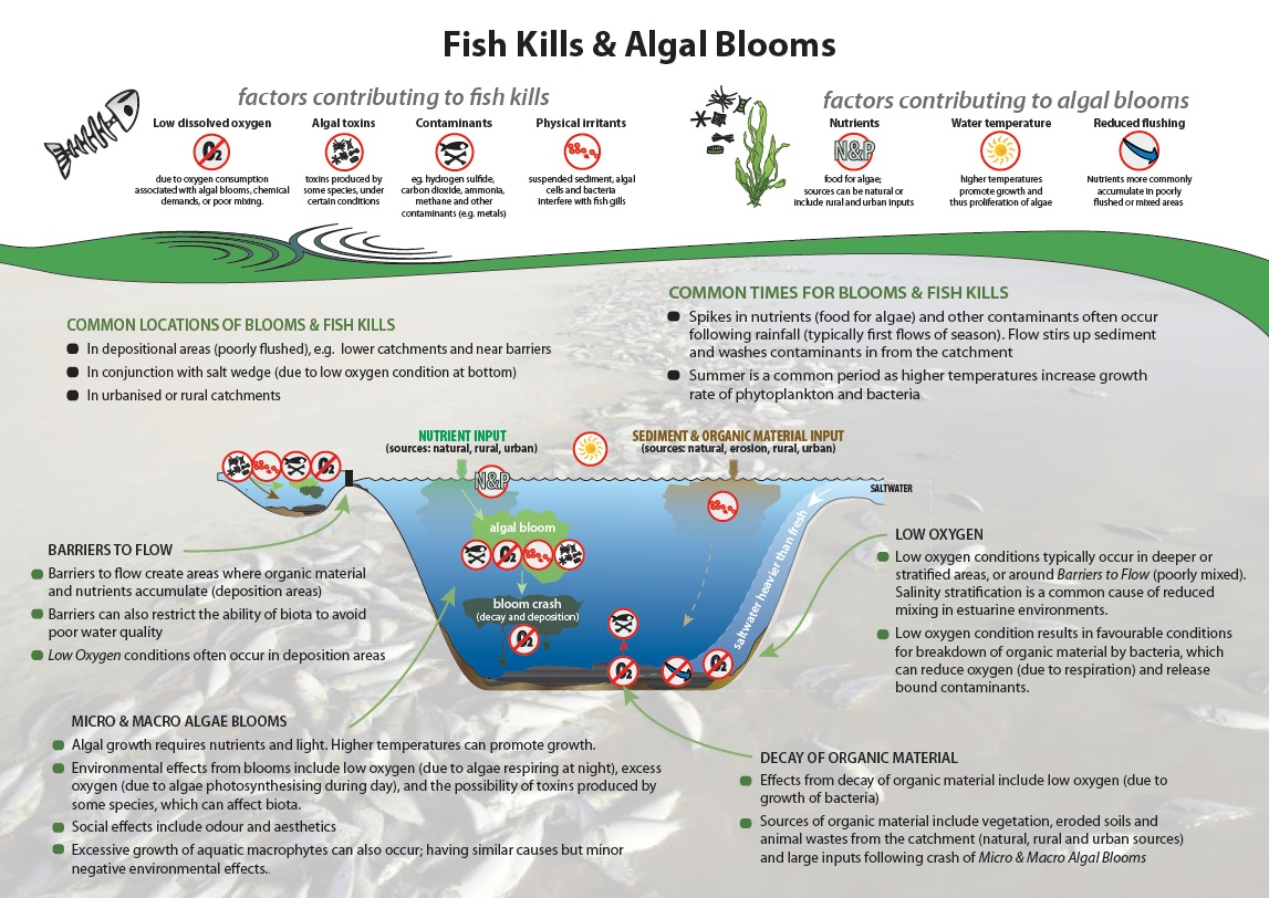 Factors contributing to fish killls and algal blooms