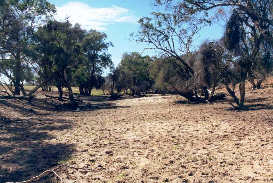 Dry river bed - Ellen Brook