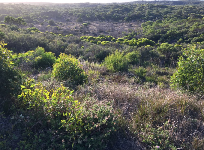 Kwongkan Shrubland is partially groundwater dependant, occurring in the swales of the plan area. Source DWER. Photograph Melanie Morcombe
